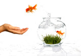 Goldfish Jumping out of His Bowl to Owners Waiting Hand poster