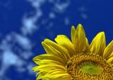 Fantastic Sunflower, Sunny day poster