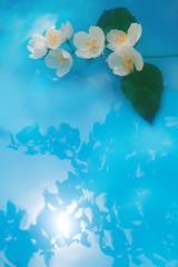 Jasmin brunch in blue water