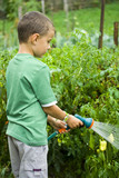 Seven years old boy spraying vegetables with a sprinkle poster