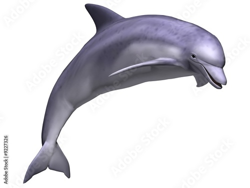 Leaping Dolphin - 9227326
