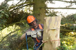 Man sawing  tree trunk