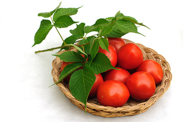 tomatos on wooden hand made   basket and green foliage