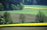 Germany, Bavaria, rape fields and forest