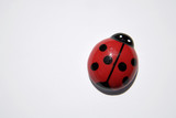 Wooden ladybug, close-up