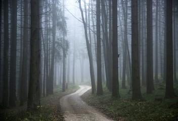 Waldweg mit Morgennebel