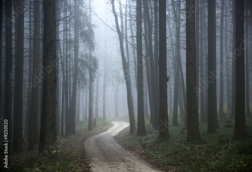 Forest track with morning mist