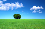 green grass field and a bunch of trees, cumulus clouds above poster