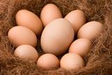 Bigger egg and regular poster