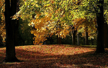 Early Autumn Time In A Park