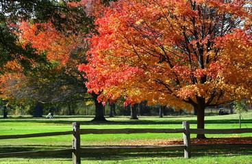 Scenic Autumn Time