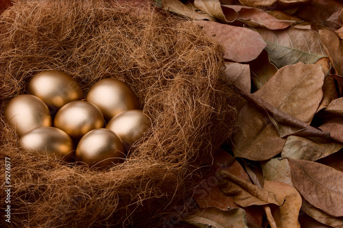 Seven golden eggs on nest