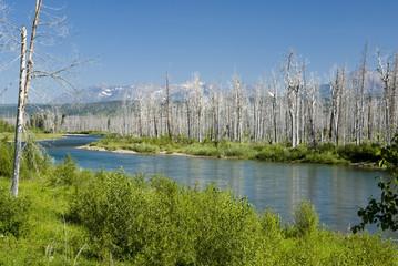 Forest fire damage in Glacier National Park