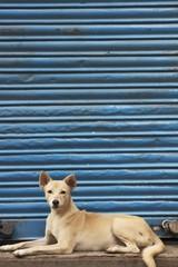 Dog Against Blue Shutter