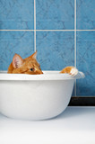 The amusing red cat lies in a basin in a bathroom poster