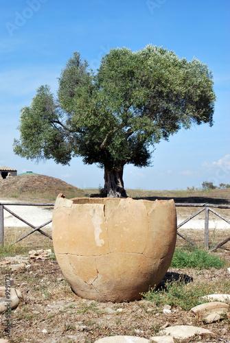 Vaso di olivo di enrico foto stock royalty free 9291173 for Acquisto piante olivo