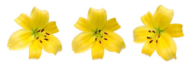 Trio de fleur de lys