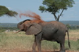 Elephant trying to keep cool