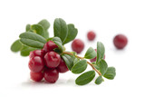 Bunch of fresh cranberries isolated on white