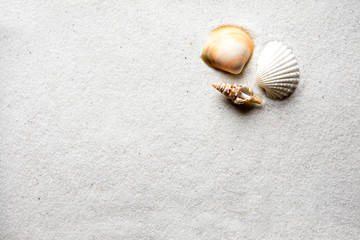Seashell and Sand