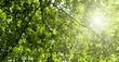 sunlight in deep forest
