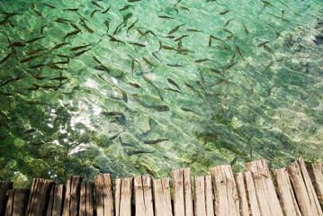fishes under freshwater