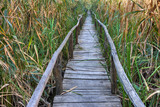 Wooden bridge in Comana Natural Park, Romania. poster