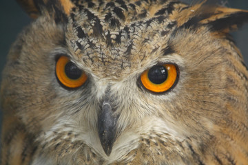 Close up of the owl's head.