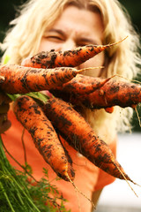 Just picked fresh organic carrots