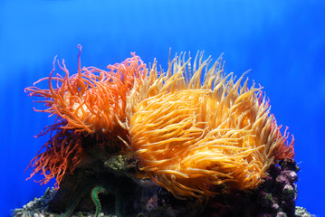 Closeup up a colorful sea coral