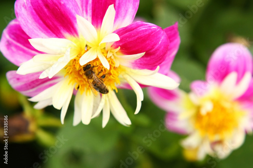 Honeybee on flower, bright and vivid