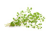 Fresh Oregano Isolated on a White Background
