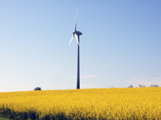 Windrad im Rapsfeld - Wind turbine in the rape field