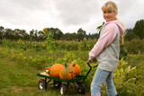 Blond smiling girl picking up pumpkins at pumpkin patch. poster