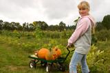 Blond smiling girl picking up pumpkins at pumpkin patch. poster