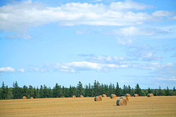 A big summer sky over a golden farm field with haybales.