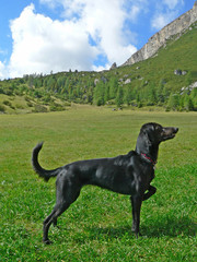 portrait of a dog in mountain