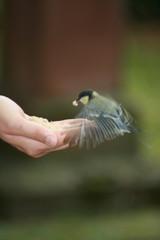 Vogel auf Hand
