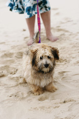 Dog walking with owner on the beach