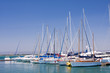 boats enchored in a marina