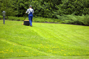 Gardener mowing. A lot of copyspace at the bottom.