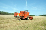 red combine harvester harvesting a grain field