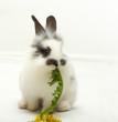 Leinwanddruck Bild Small rabbit with a dandelion