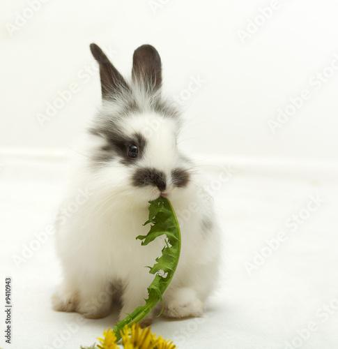Leinwandbild Motiv Small rabbit with a dandelion