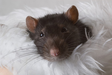 Little mouse looking at you