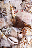 Various shellfish shells close up backgroung image