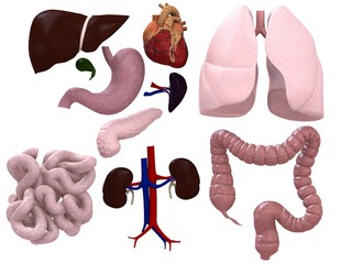 organ darstellung