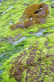 bright colored green seaweed, poster