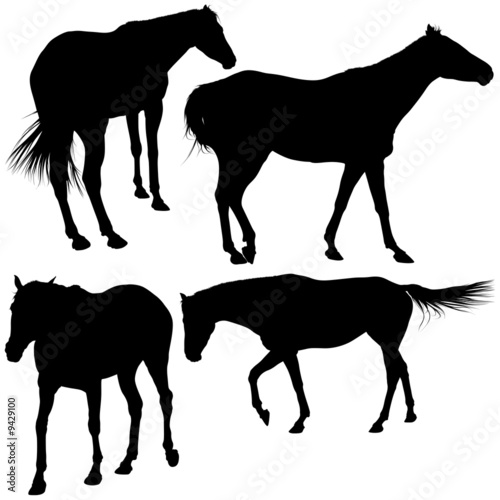 Horses Silhouettes 10 - detailed illustrations