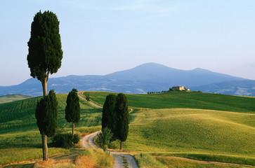 Weg,Wanderweg,Zypressen,Toskana,Monte Amiata,Val d Orcia